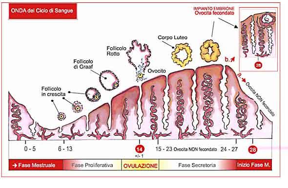 antinfiammatori steroidei cortisonici