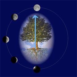 Vita E Salute Calendario Lunare.La Luna E I Ritmi Della Vita