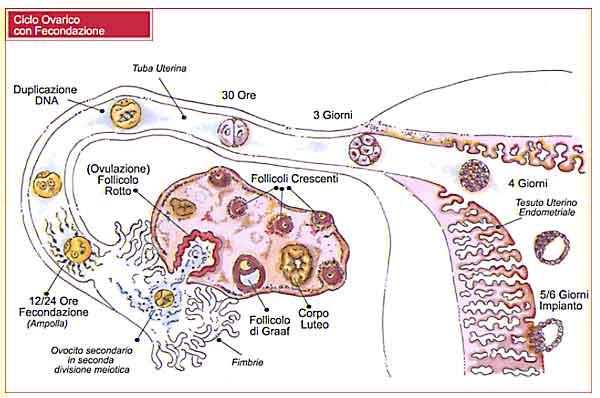 Essiccazione di cibo di un organismo per perdita di peso